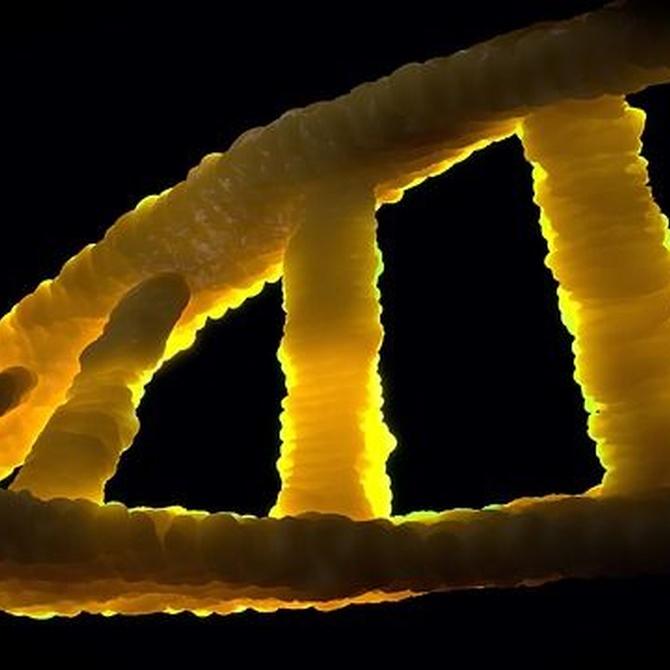 Factores genéticos del glaucoma