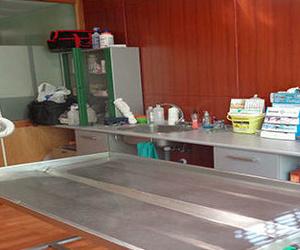 Ecografía y cirugía veterinaria en Socuéllamos, Ciudad Real