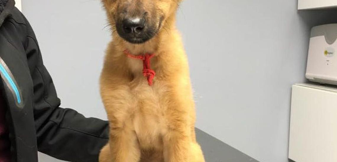 Peluquería canina en Utebo