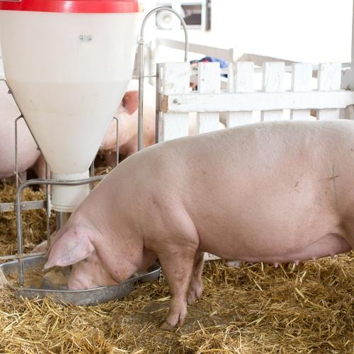 Especialistas en ganadería y en alimentación para animales de granja