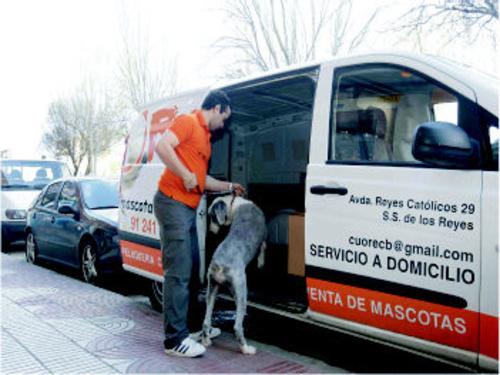 Venta de mascotas en San Sebastián de los Reyes