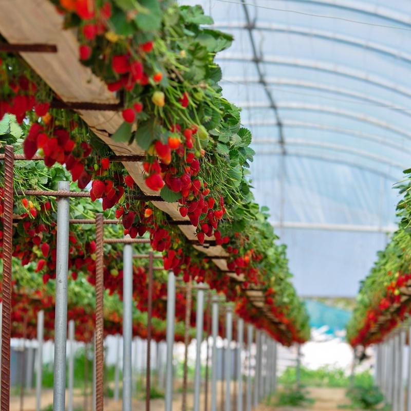 Malla sombra para frutales: Servicios de Coinva Invernaderos