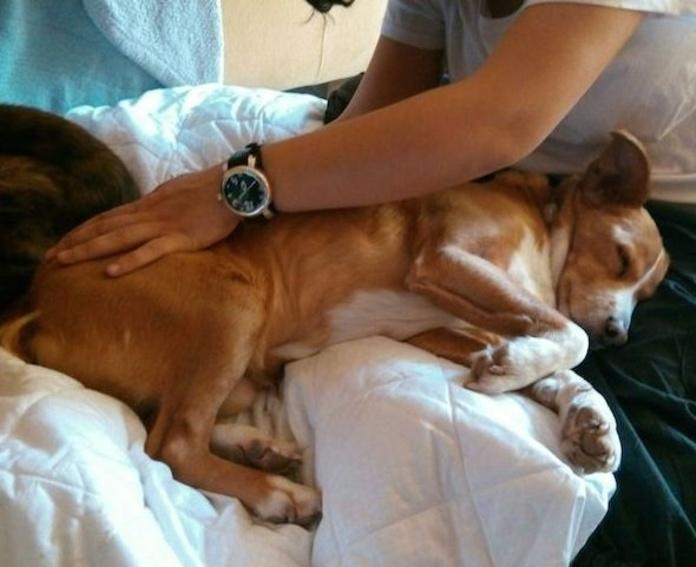 Terapia Craneosacral en animales: Qué hacemos de Vetsana