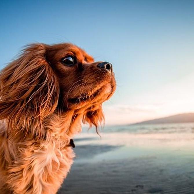 La importancia del cuidado del pelo en nuestras mascotas