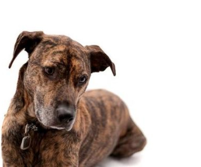 Animales domésticos : Nuestros Productos de De Pablos Correduría De Seguros