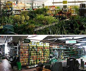 Todos los productos y servicios de Excelente surtido en productos para todo tipo de jardines: Mercajardí