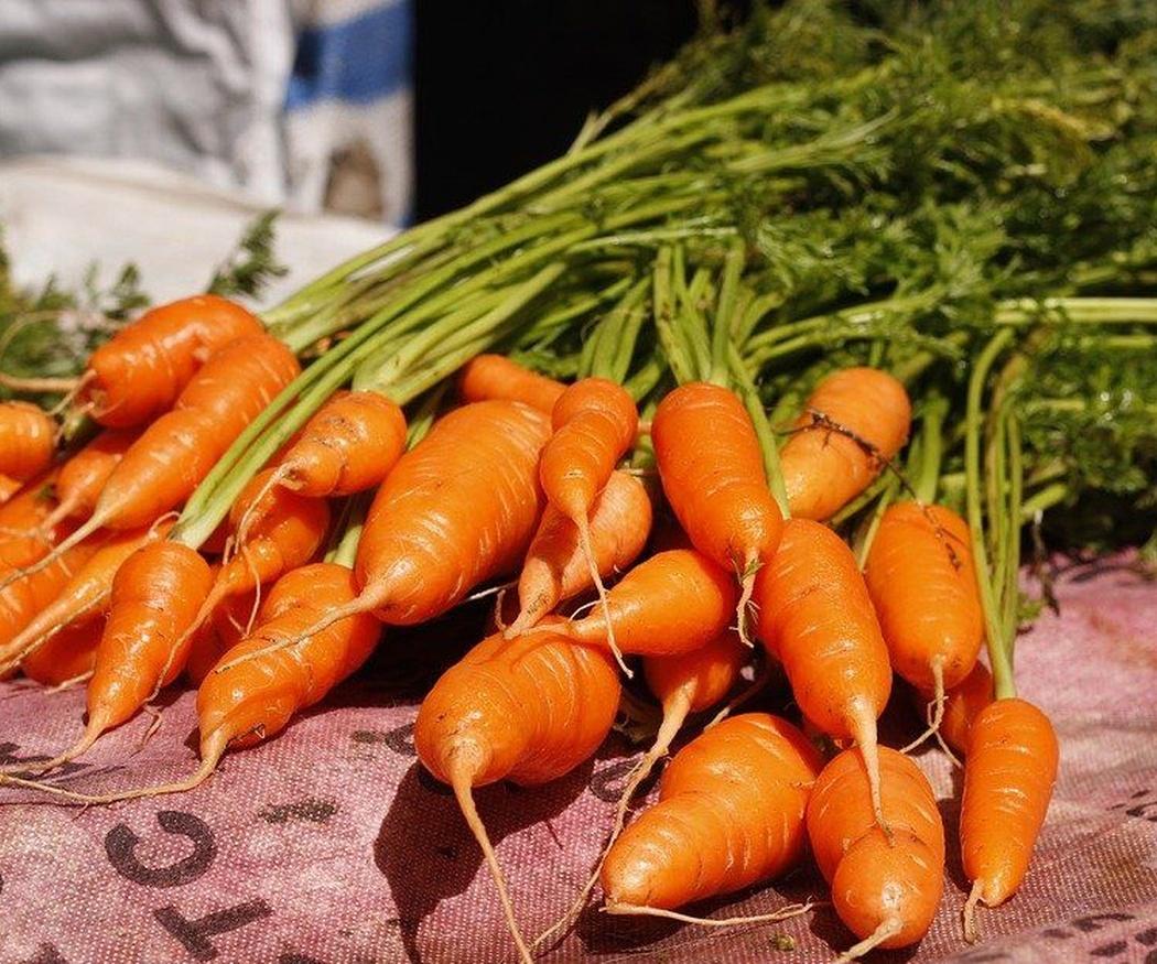 Los beneficios del consumo de zanahorias en la tercera edad