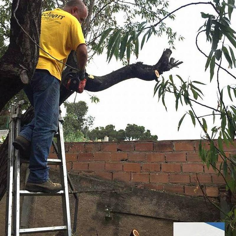 Mantenimiento de jardines : Mantenimiento y limpieza   de Lisclean