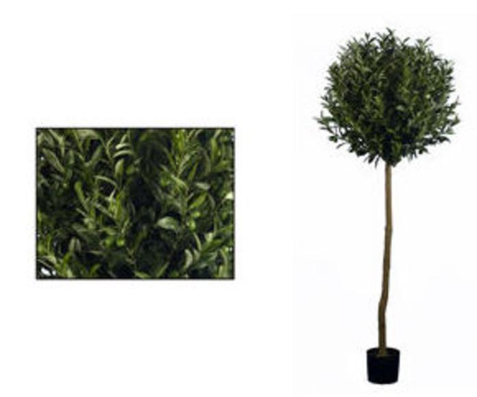 Topiari olivo con frutos 180cm