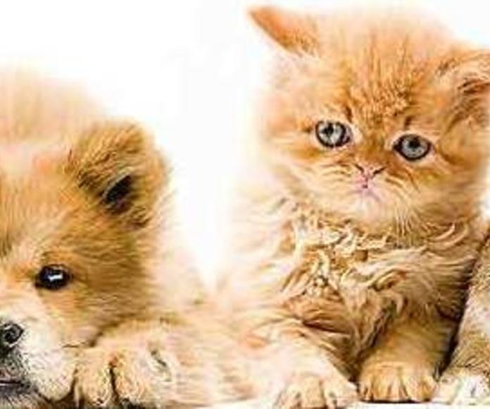 vacunación de mascotas en Argos veterinario Madrid zona Hortaleza canillas