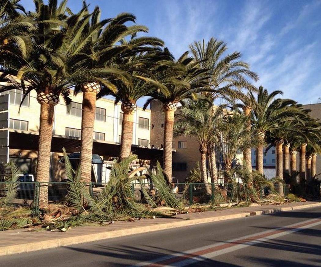 La palmera, un árbol milenario