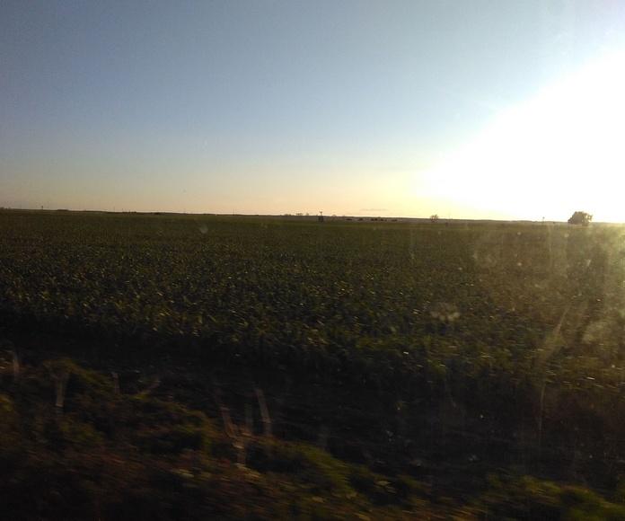 Finca en El Pedernoso: Inmuebles de ANTONIO ARAGONÉS DÍAZ PAVÓN