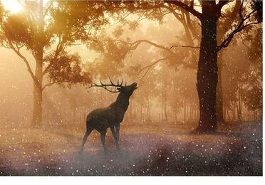 Gestión de explotaciones forestales