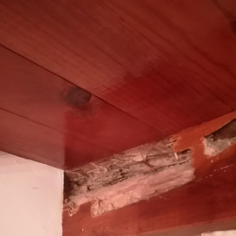 Exterminio de termitas: ¿Qué hacemos? de Plagas Blanco