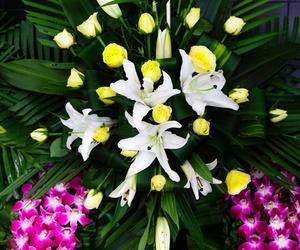 Venta de flores en Las Palmas
