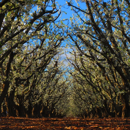 Exportador de frutas de Murcia | Uniland
