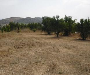 Alhaurín el Grande – Terreno Rustico / Ref.- ID-R2242520