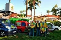 Poda de palmeras en Tenerife con expertos profesionales