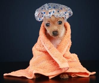 Plan de salud para cachorros: SERVICIOS  de Argos Centro Veterinario