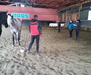 Aprendizaje con caballos