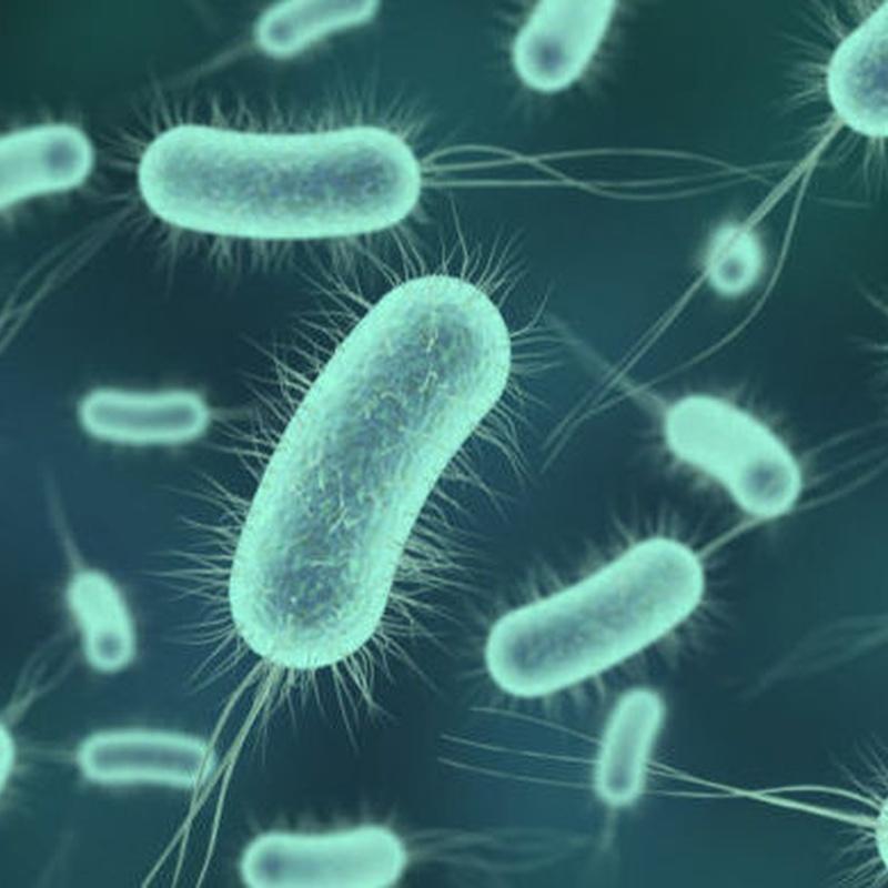 Desinfección de bacterias y virus