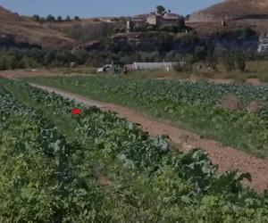 Rivas tiene huerta y ganadería en el Soto del Grillo