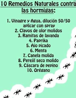 10 REMEDIOS NATURALES CONTRA LAS HORMIGAS