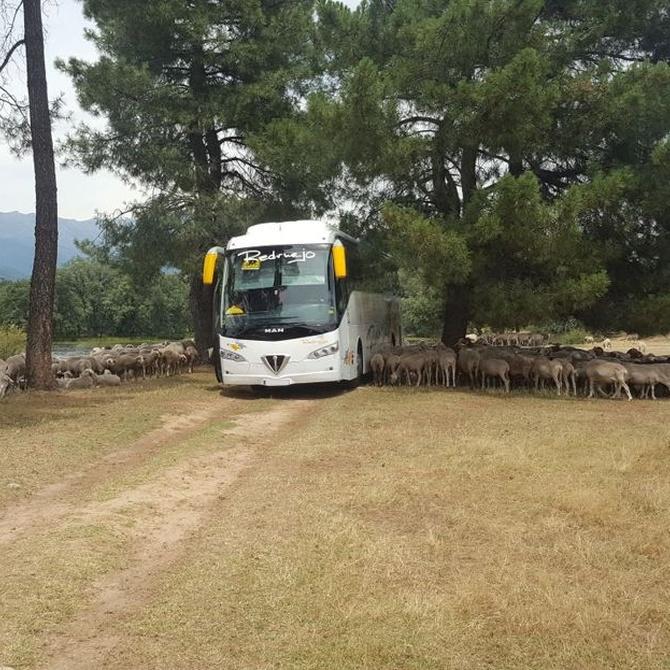 Reducir la contaminación usando el autobús