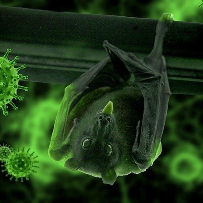 Cómo mantener la oficina libre de coronavirus con la limpieza