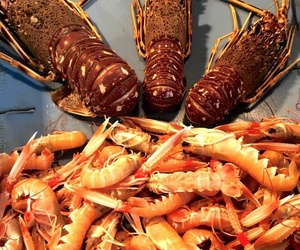 Comprar marisco fresco en Mataró