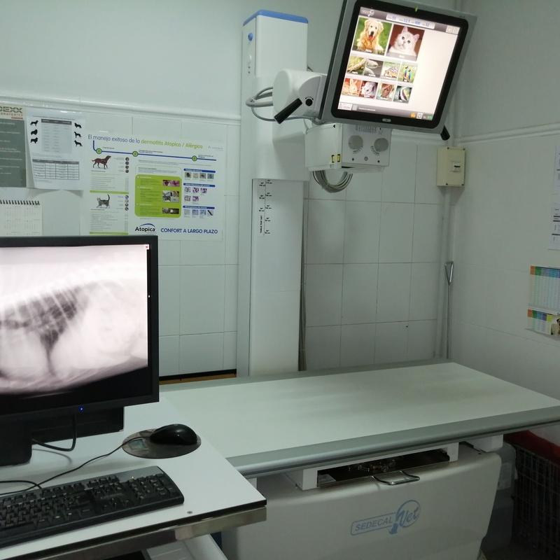 Diagnóstico por imagen: Servicios veterinarios de Clínica Veterinaria Leganés Norte