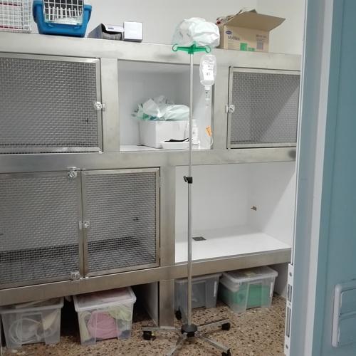 Acupuntura veterinaria Sant Sadurni d´Anoia | Veterinaria Animavet