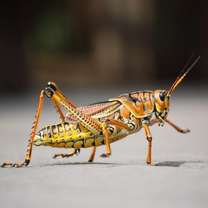 El imperio de los insectos