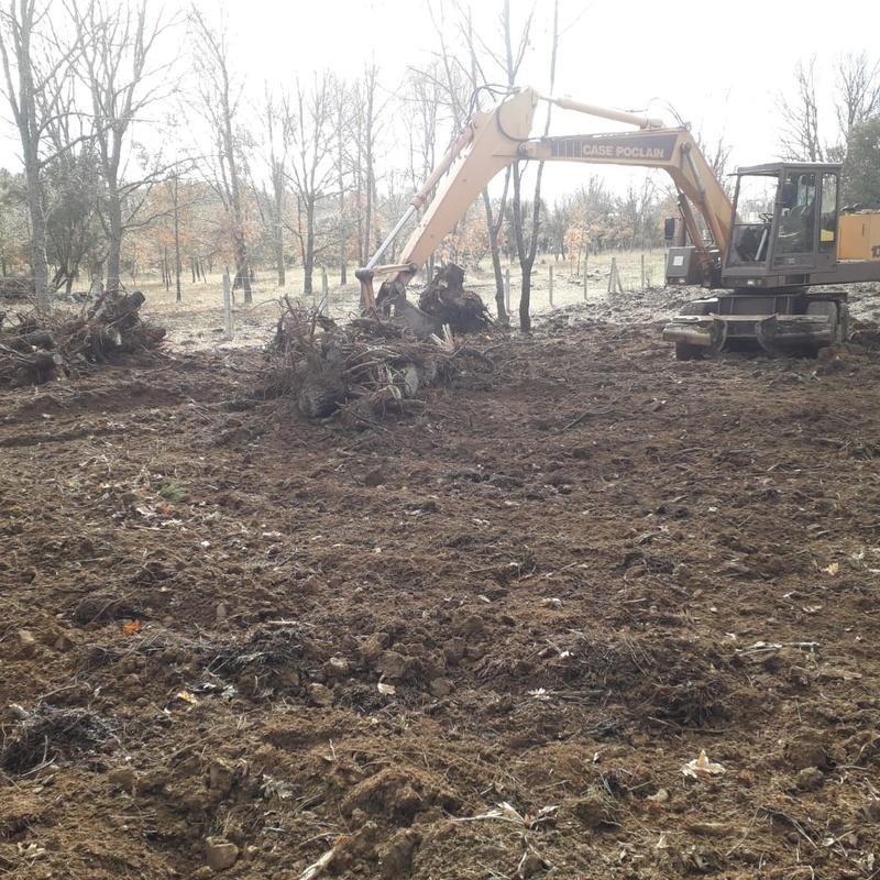 Excavaciones en superficies forestales