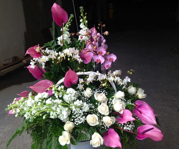 Nacimientos : Servicios  de Flores y viveros Prado