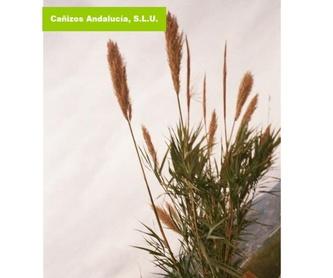Brezo: Productos de Cañizos Andalucía