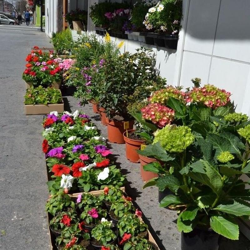 Venta de materiales para jardinería : Servicios  de Alfarería Garmendia