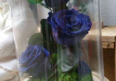 Rosas eternas en cúpula de cristal