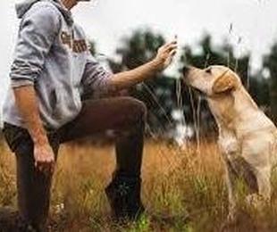 Adiestramiento y alojamiento canino