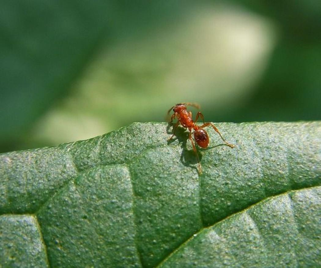 Las plagas más comunes en los jardines