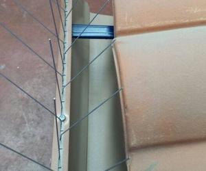 Colocación de varillas, redes antipaloma y limpieza