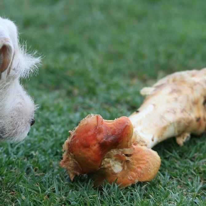 Evita que tu perro se coma los huesos