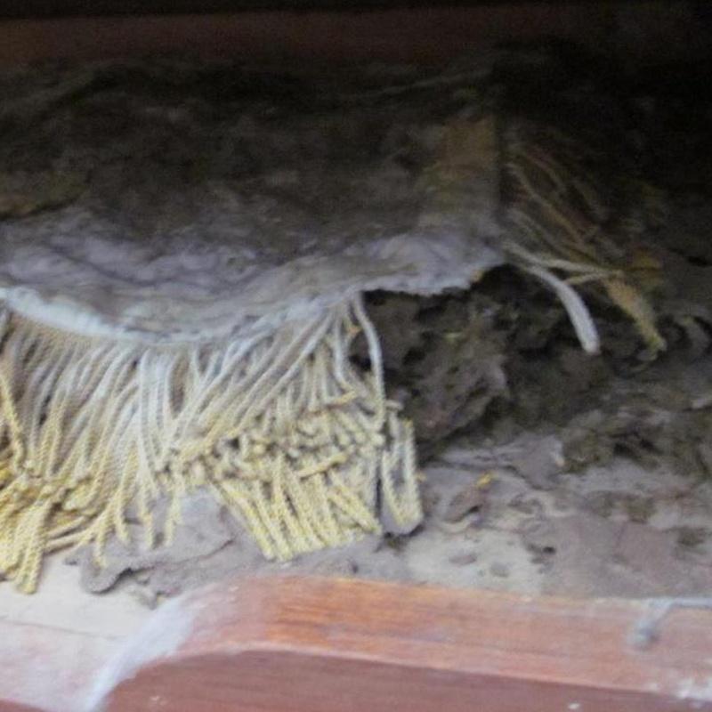 Termitas y tejido