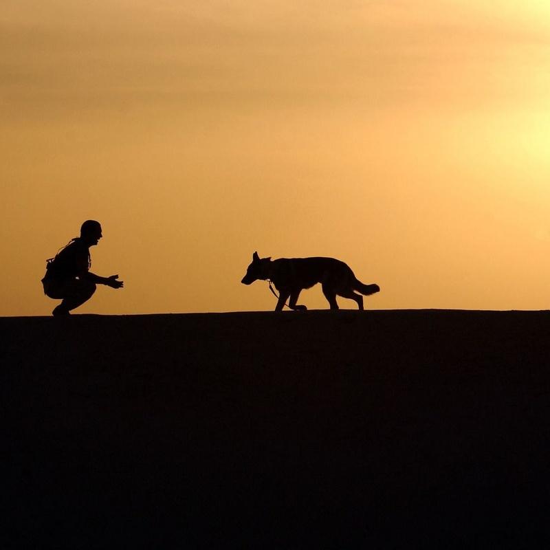 Vigilancia permanente: ¿Qué hacemos?  de Guardería Canina Estíbaliz