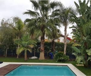 Plantación de palmera