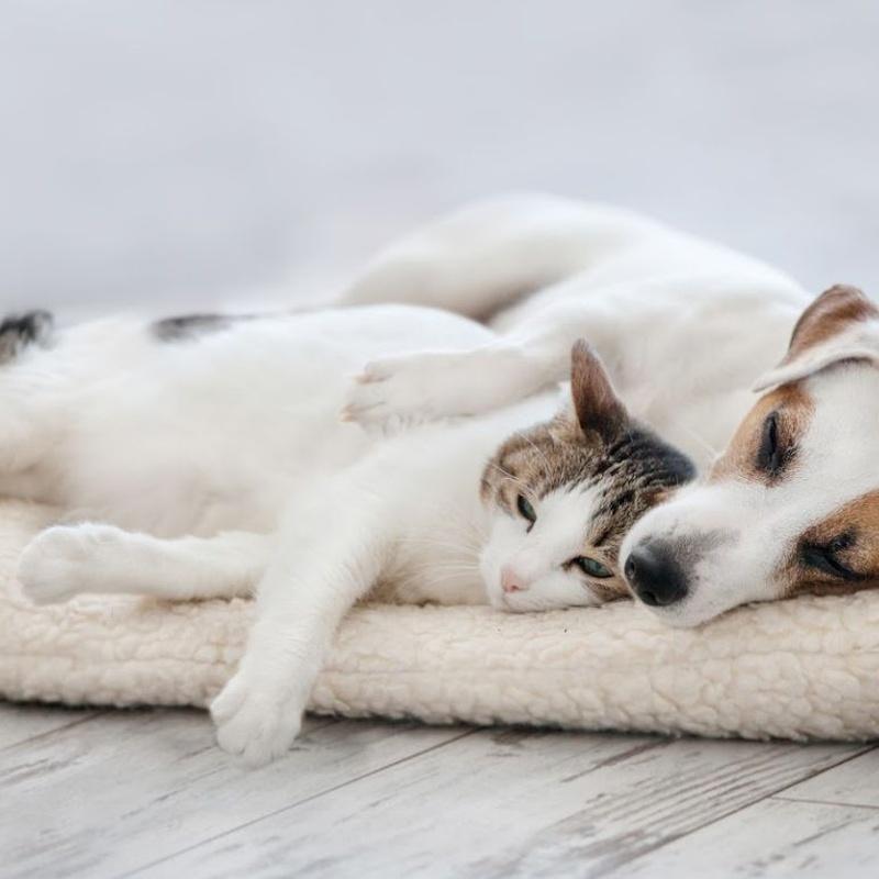Servicios veterinarios: Productos y servicios de JORDI / DAVINIA