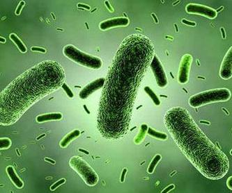 Control de plagas de ratas y ratones: Servicios de Abando Desinfecciones