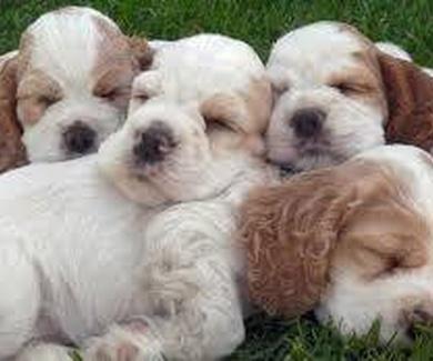Plan de salud para cachorros