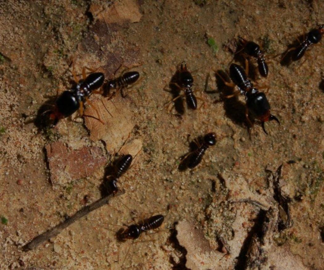 Cómo detectar termitas en casa
