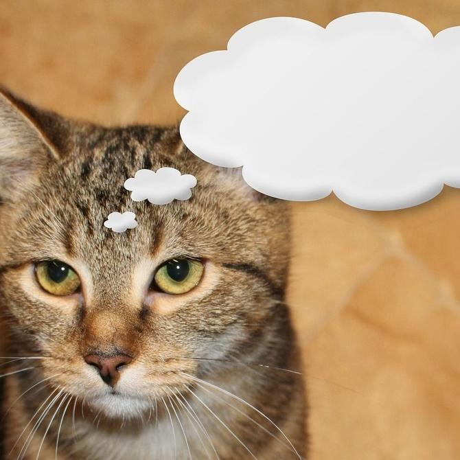 ¿Qué dice tu gato? Aprende a identificar sus señales
